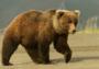成铭专栏:体育产业需要懒熊精神