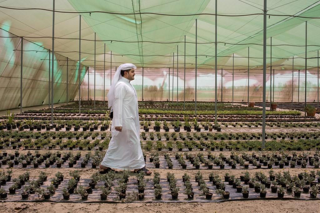 造城加绿化,卡塔尔在为2022年世界做着什么准备?