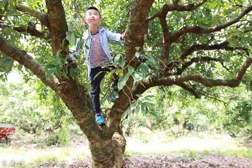 我的童年长在树上|韩牧专栏
